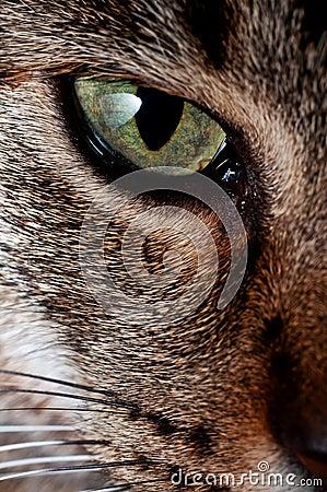 Cat s Eye.