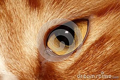 Cat s eyes.