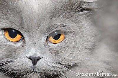 Cat s face