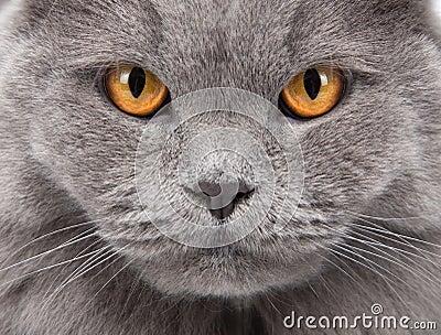 Cat s face closeup
