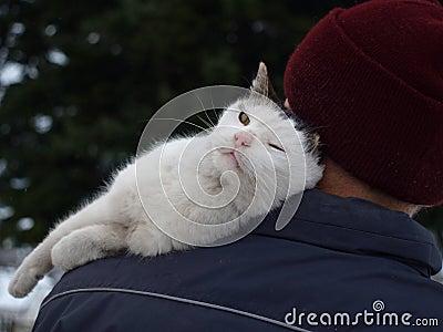 Cat s love