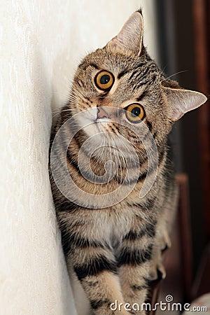Cat s portrait