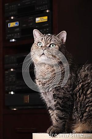 Cat s portrait.