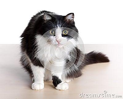 Cat s sight