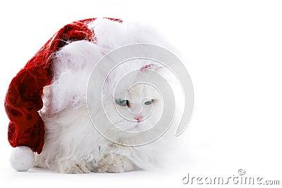 Cat in the Santa cap