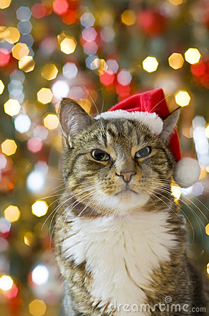 Cat with Santa Claus red hat