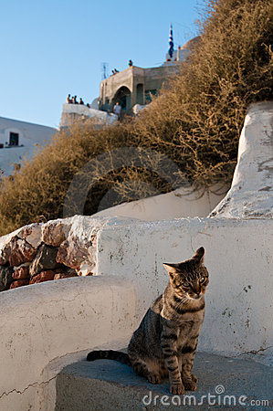 Cat in Santorini
