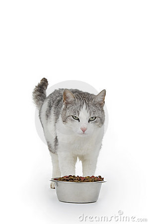 Cat with saucer