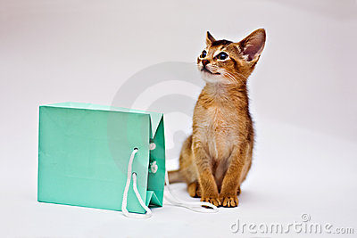 Cat with shopping bag