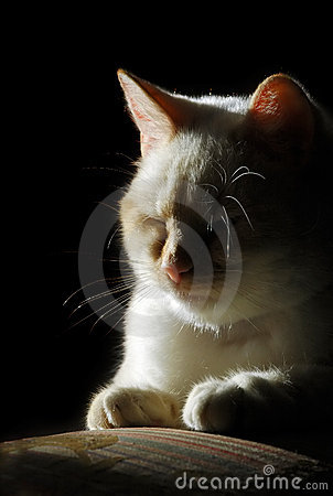 Free Cat Silhouette Royalty Free Stock Photo - 8021805