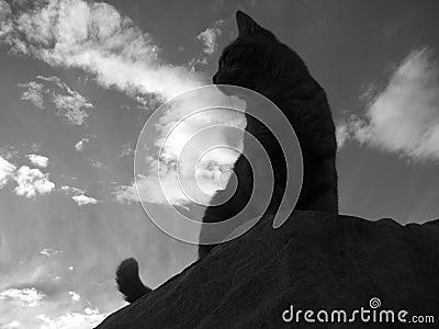 Cat Silhouette B/W