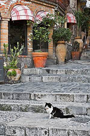 Cat sitting on alley steps