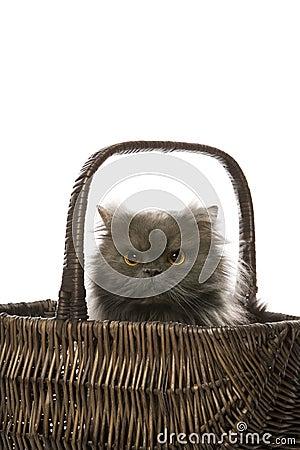 Cat sitting in basket.