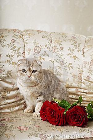 Cat sitting on a beautiful vintage couch