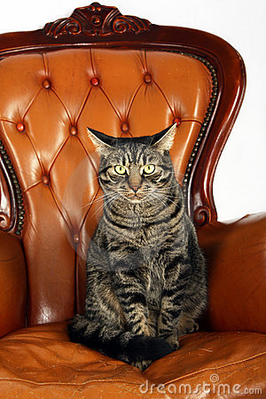 cat-sitting-chair-17036515.jpg