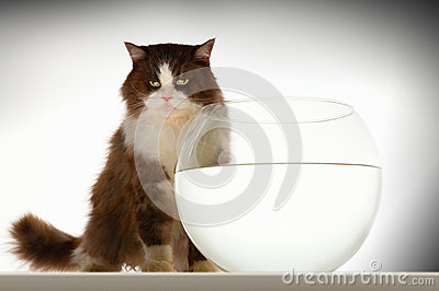 Cat Sitting By Empty Fishbowl