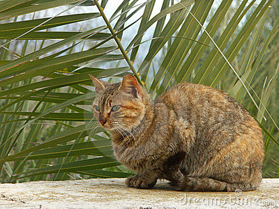Cat sitting in front of palm tree