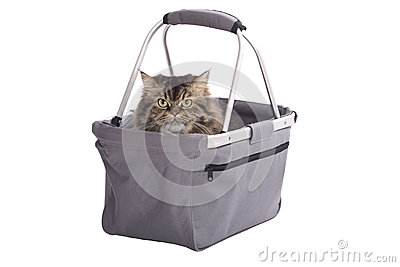 Cat sitting in shopping basket