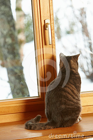 Cat Sitting On Window Ledge Looking At Snowy View