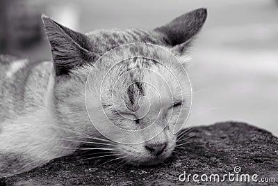 The cat sleep, black & white