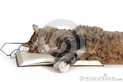 Cat Sleeping on Book Stock Photo