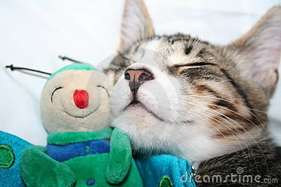 Cat sleeping with puppet