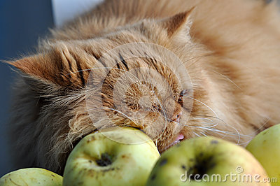 Cat sleeps and Apples