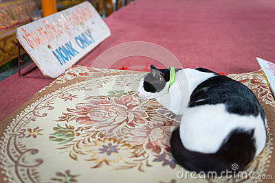 Cat sleeps on a carpet  in the temple