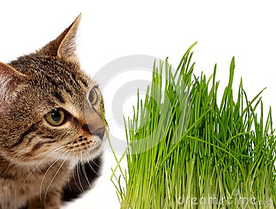 Cat smelling a green grass