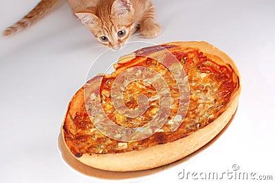 A cat smells pizza