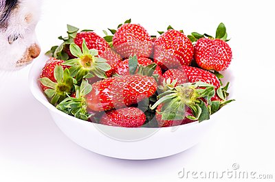 Cat smells strawberry