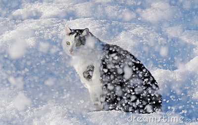 Cat and a snow.