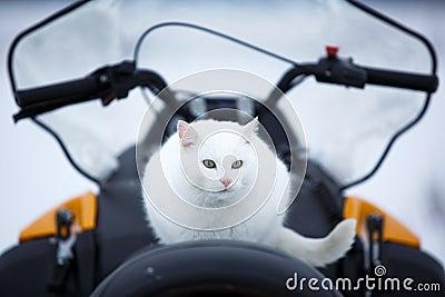 Cat in snowmobile