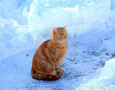 Cat in snowy outdoors