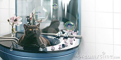 Cat and soap bubbles