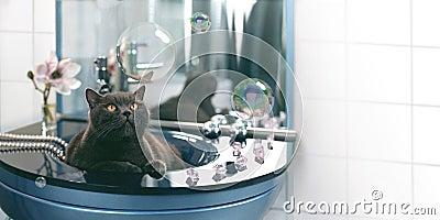 Cat and soap bubbles