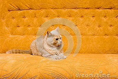 Cat on the sofa