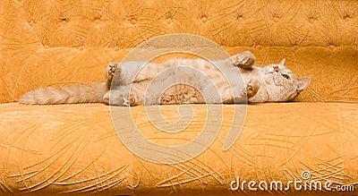 Cat on the sofa
