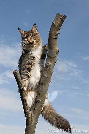 Cat standing on branch