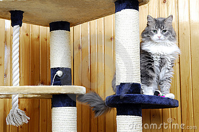 Cat standing in a huge cat-house