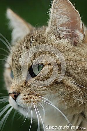 Cat Stare