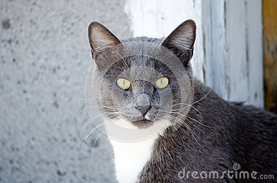 Cat stare down