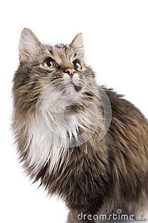 Cat staring.