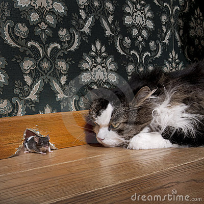 Free Cat Staring At A Mouse Stock Images - 8554734