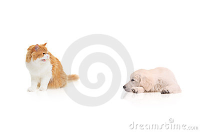 Cat staring at a dog
