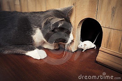 Cat staring at a mouse coming out of it s hole