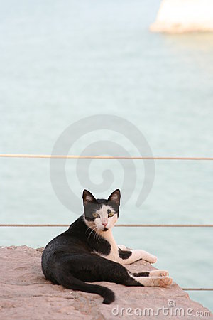 Cat Staring At Red Sea 2