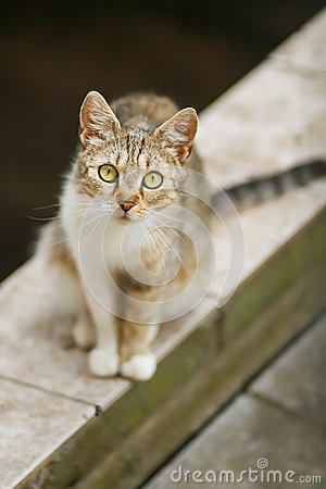 Cat staring at you