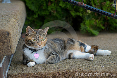 Cat on a step