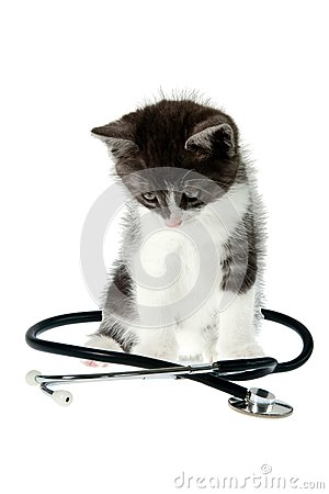 Cat and stethoscope